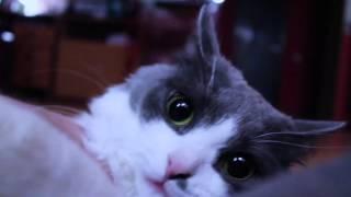 Женщина кошка. 2 выпуск