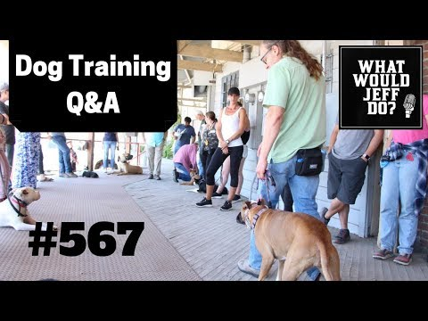dog-training---training-dogs-recall---stop-dog-digging---what-would-jeff-do?-q&a-ep.567-(2019)