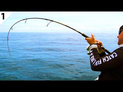 GIANT Yellowtail Kingfish & Snapper W/ Catch Fishing Tackle -- #FieldTrips New Zealand Ep 1