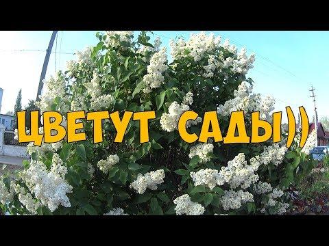 Цветут сады)))