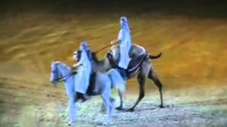 Выездка на верблюде это возможно