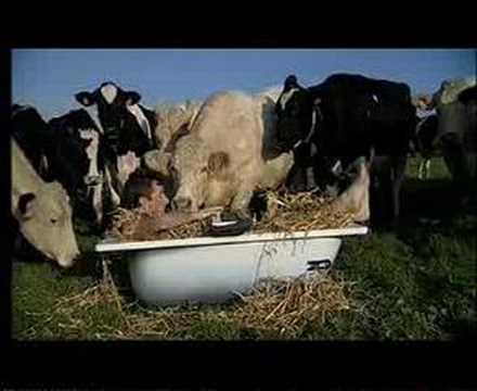 Clip chanson tout nu dans mon bain youtube - Les simpson tout nu ...