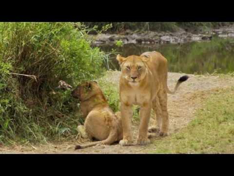 Tanzanian Safari 2012