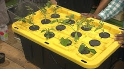 Building an Inexpensive Hydroponics/Aeroponics System