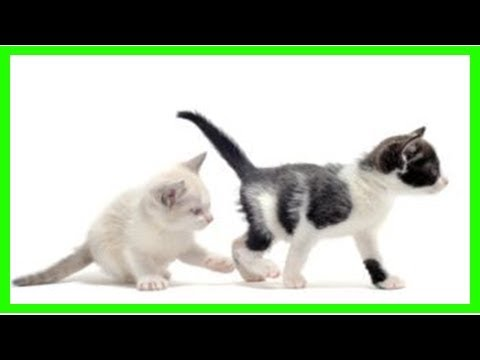 Are there behavior differences between male and female cats?