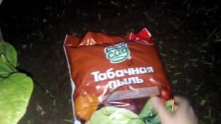 Горчичный жмых и Табачная пыль- ЭКО инсектициды