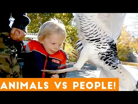 Ultimate People Vs Animals Fail Compilation | Funny Pet Videos February 2018
