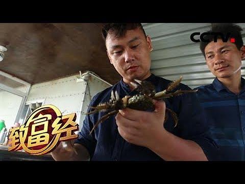《致富经》玻璃栈道走螃蟹 折腾小伙巧赚钱 20190513 | CCTV农业