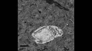 Renovo Neural 3-dimensional electron microscopy of Neuronal cell body