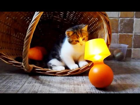 Cute Kitten in the orange spirits