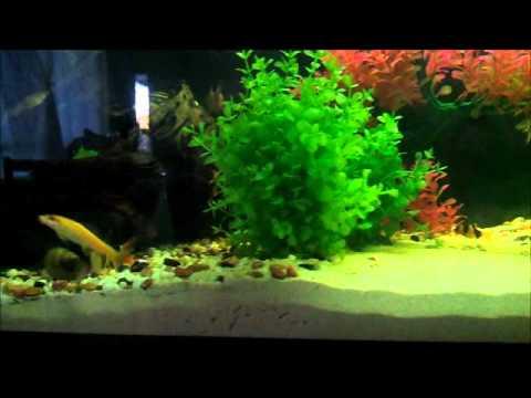 Artificial Aquascaping.wmv