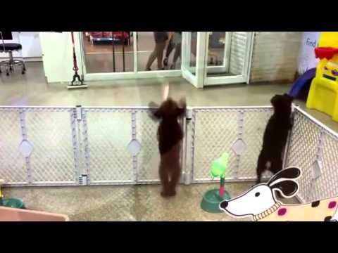 Dancing Salsa Dog