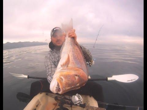 Pesca en Kayak - Al Vivo - Dentex Dentex