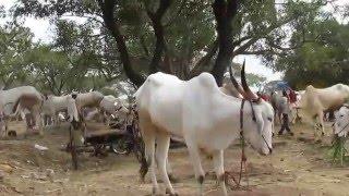 india  bull market 2015