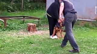 Защитно-караульная служба. Немецкая овчарка(, 2013-06-05T12:46:47.000Z)