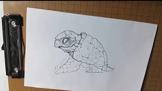 How to Draw a Sea Turtle  - by mr.T