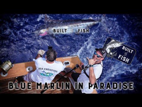 Blue Marlin Fishing In Paradise - Kona