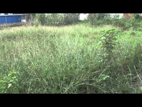 4000sqft Land For Sale @240L in Domain Layout, Behind Graphite India, Bangalore Refind:11158