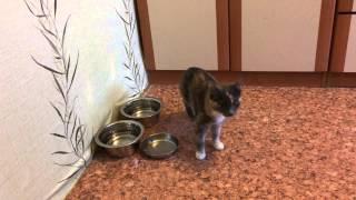 Трехцветный котенок из Зеленограда