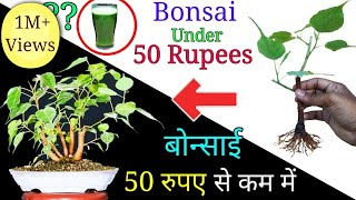 How to make Bonsai tree under 50 Rupees | Easily create bonsai at home