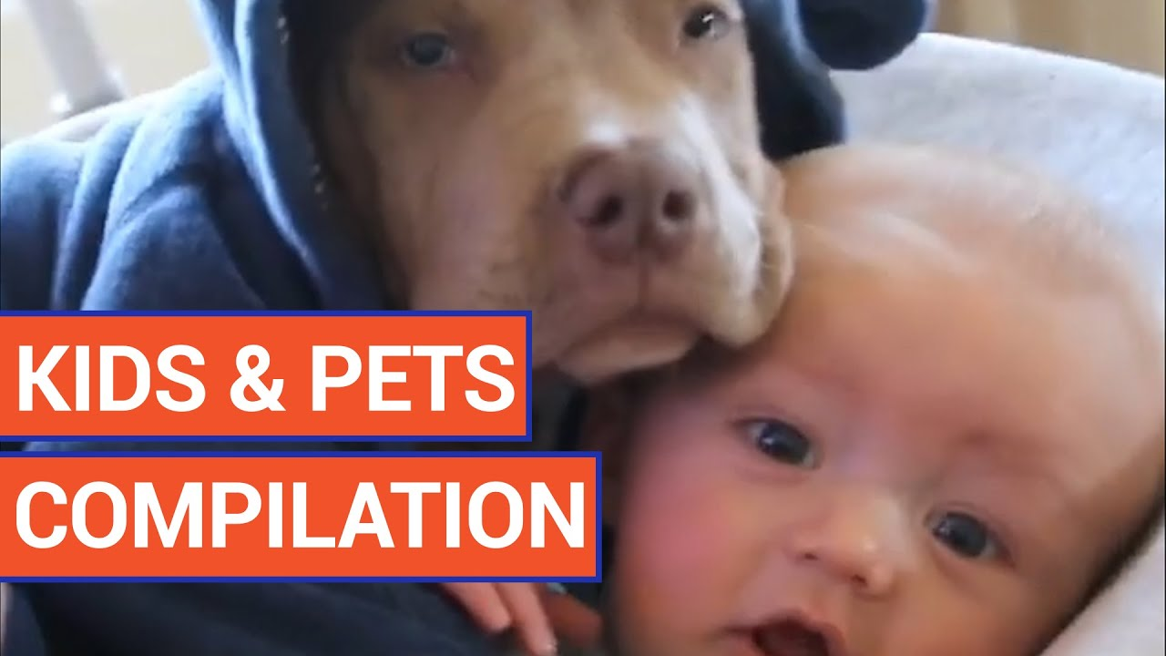 Sweet Kids With Pets Video Compilation 2016
