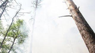 видео На территории России стремительно увеличивается область природных пожаров