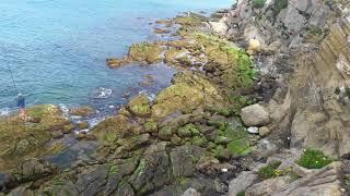جمال الطبيعة البحر الدالية