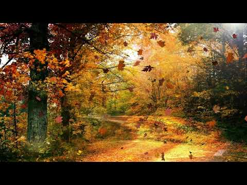 Forest sounds with wind - 1 Hour Nature Sound Effects of Light Windy Gusts in Woodland Forests Trees