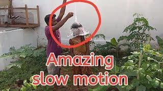 Amazing slow motion