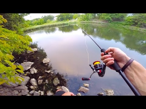 The Easiest Fish is The HARDEST to Catch