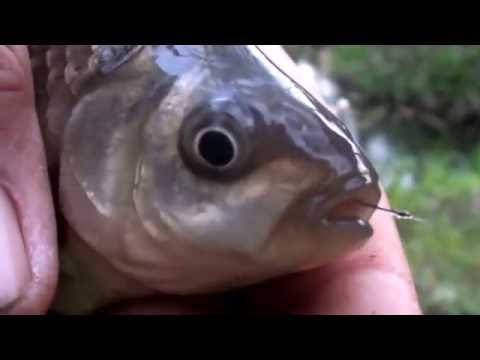 Pescuit caras la balta Stefanesti 20-04-2015