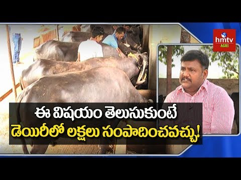 How To Get High Profits In Dairy Farming | hmtv Agri