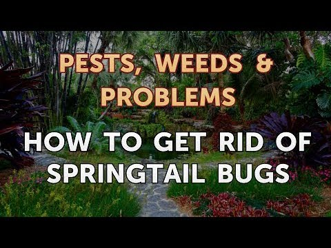 How to Get Rid of Springtail Bugs