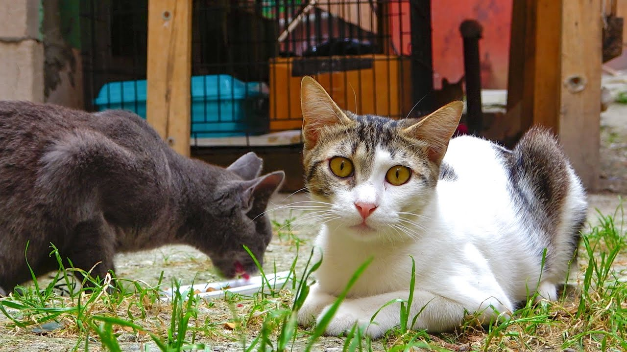 Cat Berlin, the most timid cat of 2021, wants to socialize   Watch Now ! @Adorable Paws