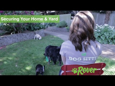 Keep Your Dog Safe by Securing Your Home & Yard - Rover.com Quick Tips