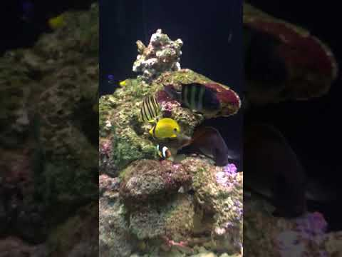 Marine fish tank in chennai