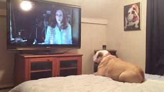 "Bulldog Reacts To Terrifying Nun Scene in ""The Conjuring 2"""
