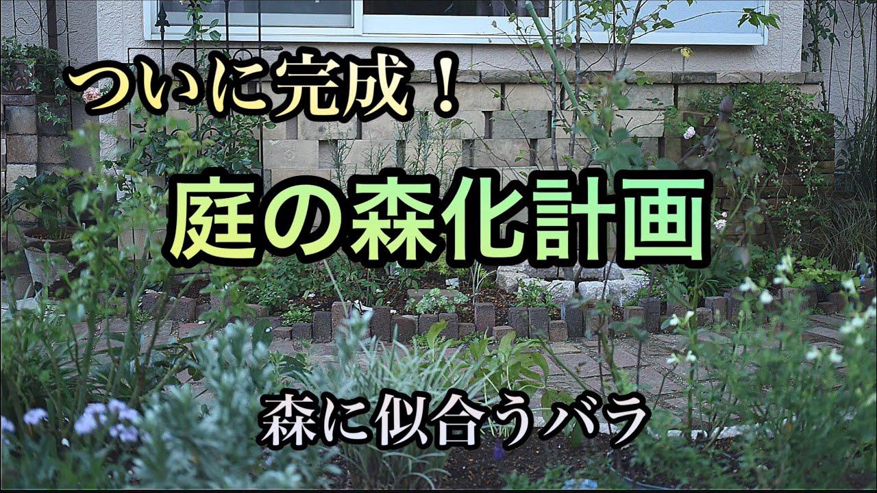 【庭の森化計画】バラの断捨離と残したバラ・庭改造・ガーデニングdiy