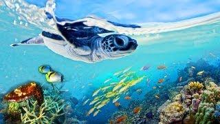 Das Great Barrier Reef (BBC) Trailer