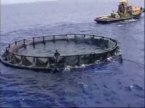 Subflex 3- Early Designs Of Giliocean Floting Fish Cages