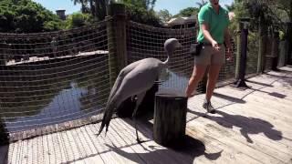 Animal Experience Encounters teaser intro PB ZOO