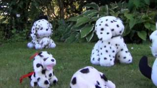 Sunbathing dalmatians