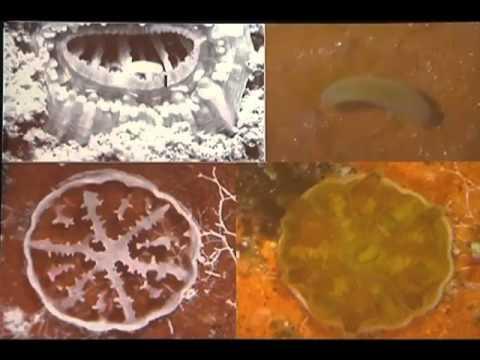 4. Anne L. Cohen - Marine Calcification Meets Ocean Acidification