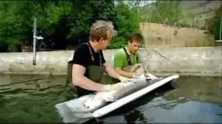 Gordon Ramsay Caviar thumbnail