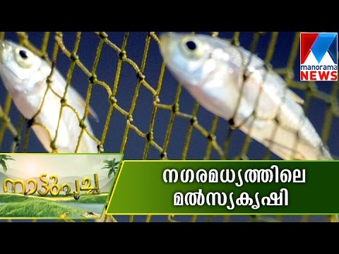 Fish farming can also do in limited arena    Manorama News