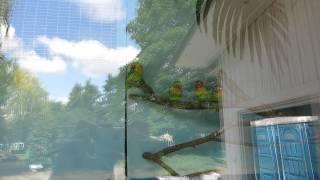 Попугаи неразлучники в минском зоопарке.(группа вконтакте: http://vk.com/pgshelp1 сайт: https://sites.google.com/site/na5balov заказать работу: ..., 2014-07-23T16:20:25.000Z)
