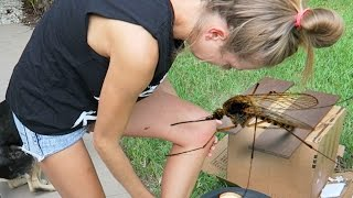 GIRL EATEN ALIVE!! (7.1.15 - Day 2254)