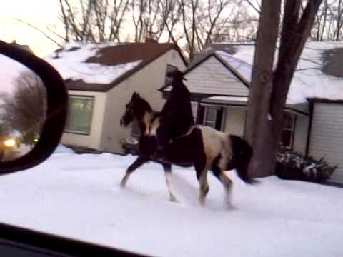 Detroit Cowboy. On a horse in the hood!
