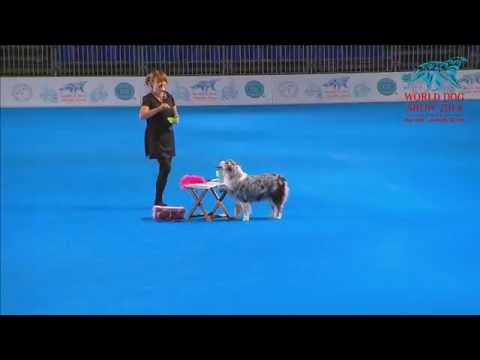 FCI Dog dance World Championship 2016 – Freestyle final  - Nina Roegner and Moster (Sweden)
