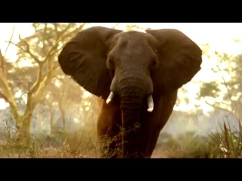 Gorongosa Field Notes: Return of the African Elephant